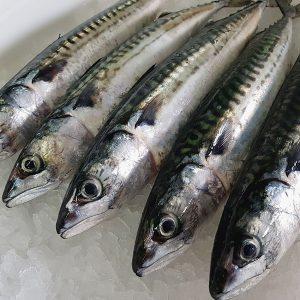 ¿Cuándo se produce el rigor mortis en el pescado?