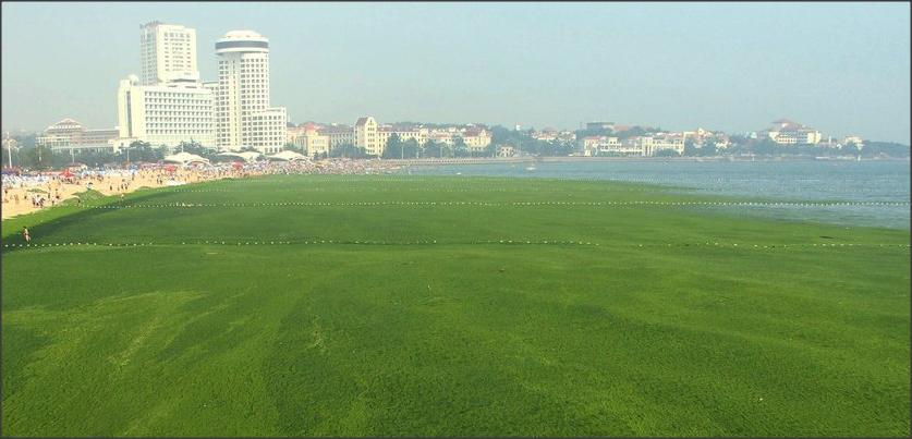 El problema del exceso de nutrientes en el mar (eutrofización)