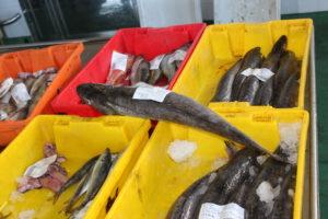 Cajas de pescado en lonja gallega